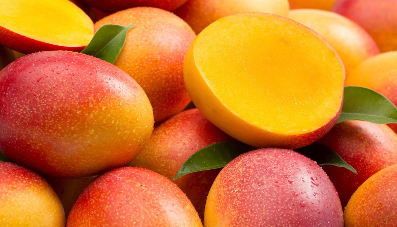 Mango Kent. tipos de mango