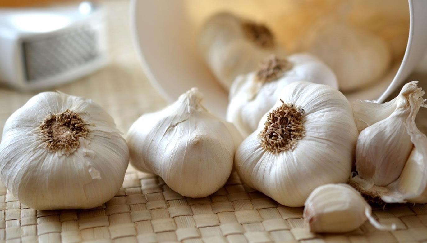 Chinese garlic (Traditional white)