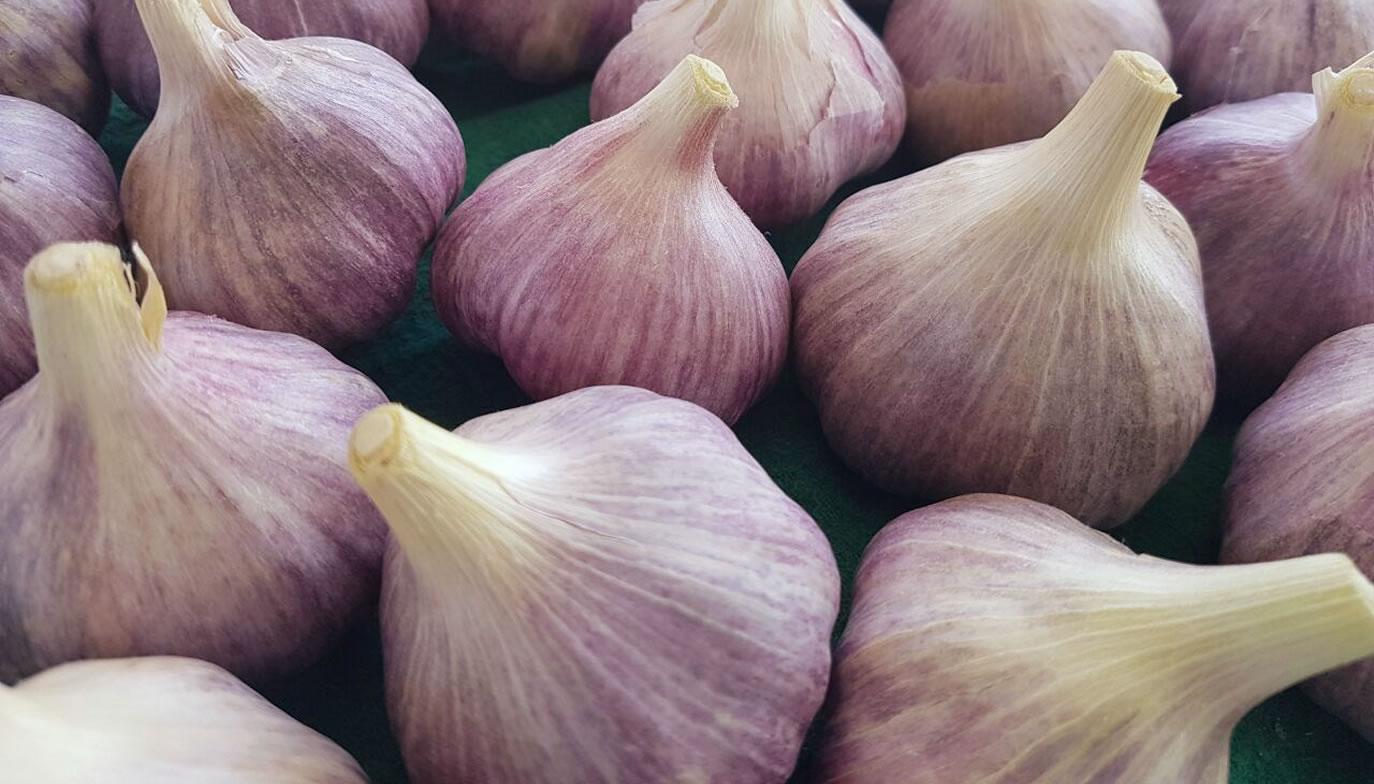 Napuri garlic (Brown)